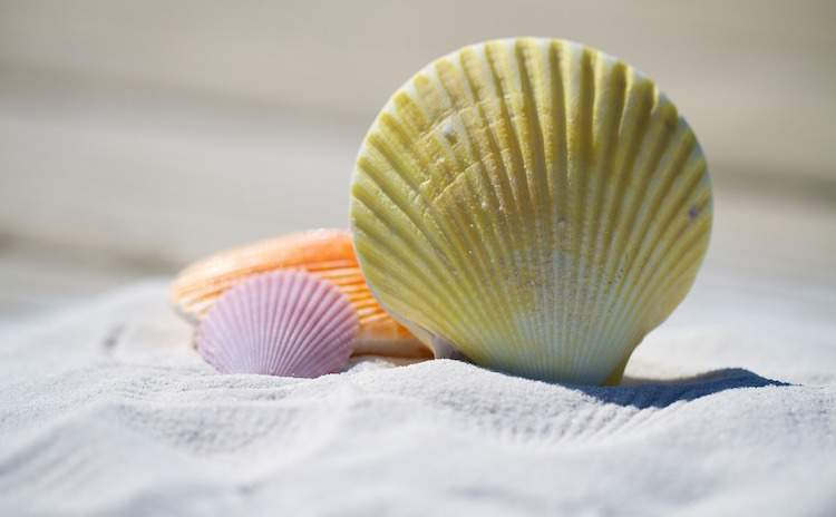 seashells conchas do mar coloridas colorful