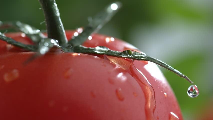 tomatoe_tomate_gota_agua_drop_water_close